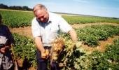 Семеноводство картофеля